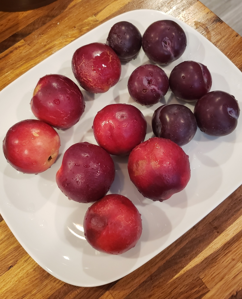 Nectarines and plums from my weekly Hungry Harvest delivery.